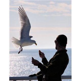 Man feeding a seagull